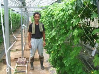 田中農園ゴーヤー