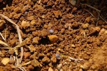 みかん畑の土と虫たち
