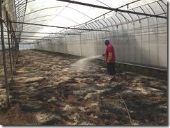 菌力アップで土ごと発酵