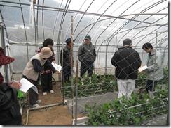 スナップエンドウ一般栽培