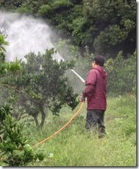 純正木酢液の葉面散布