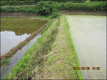 藻の発生比較